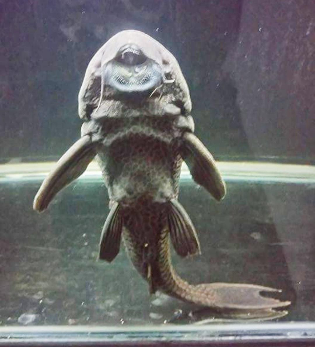 7 Cara Membersihkan Kaca Aquarium Yang Berkerak Paling Ampuh Hobinatang