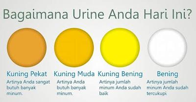 Warna Air Kencing Menentukan Hydration Badan Anda.