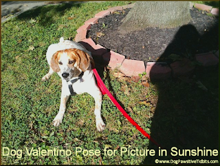 Dog Valentino Poses for Pictures in Sunshine