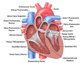 gejala penyakit klep jantung