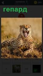ответ на 3 уровень гепард