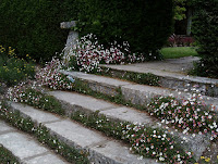 Erigeron garden design Steps Kingston Maurward Green Fingered Blog