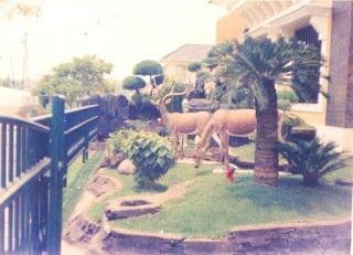 Galeri Taman - Tukang Taman Surabaya 12