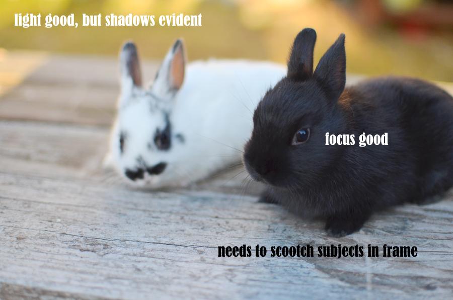 Photographs of Bunnies