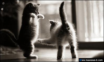 صور صور قطط كيوت 2020 خلفيات قطط جميلة جدا cats31.png