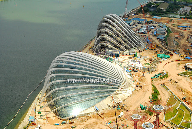 Singapore Clam Shell