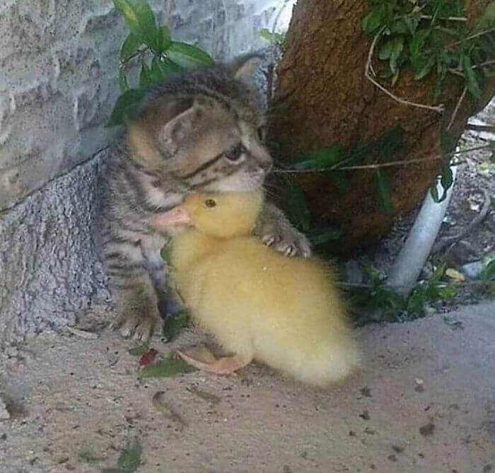 28 Incredibly Cute Pictures Every Duck Lover Will Fall For