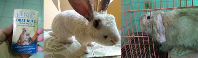 obat kutu kelinci