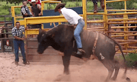 gírias-de-cowboy-caipira