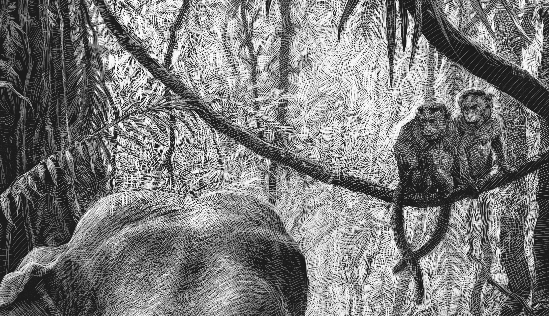12-Monkeys-Detail-Ricardo-Martinez-Wild-Animals-inside-Scratchboard-Drawings-www-designstack-co