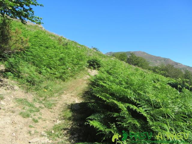 Salida del bosque de Llananzanes al Alto Piedrafita