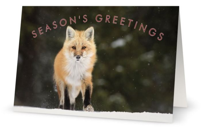 National Wildlife Federation Christmas Cards