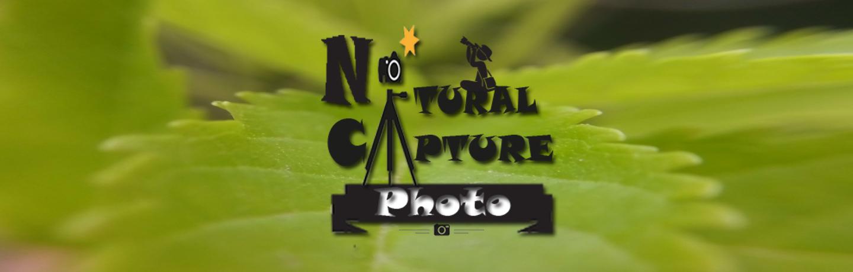 Nature Quotes Naturalcapturephoto