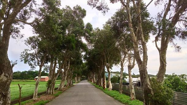 「2017桃園地景藝術節」將於8月18日登場,觀音廣福社區主場區的環境裝置藝術,已陸續裝置完成。