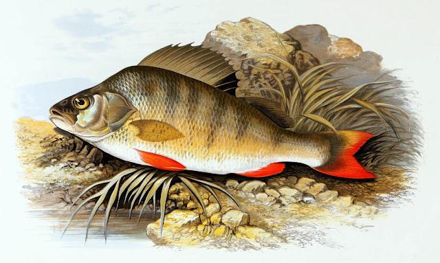 أنواع وفوائد السمك