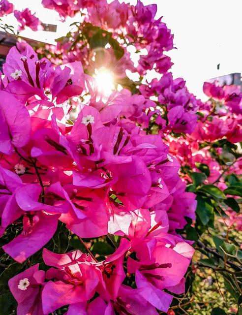 Contoh Foto Oppo A7 Hasil Kamera Jepretan_7