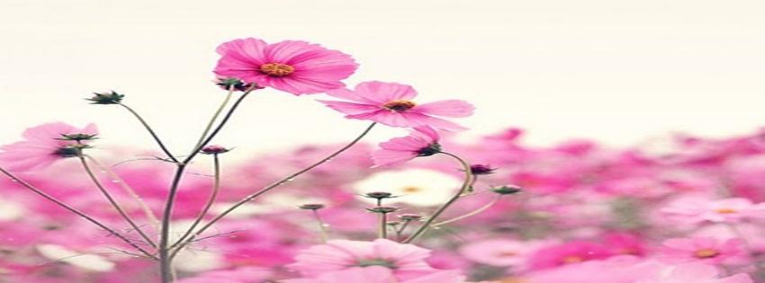 Fondos Timeline Facebook,portada,flores, Naturaleza