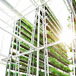 Singapore's First Commercial Vertical Farm