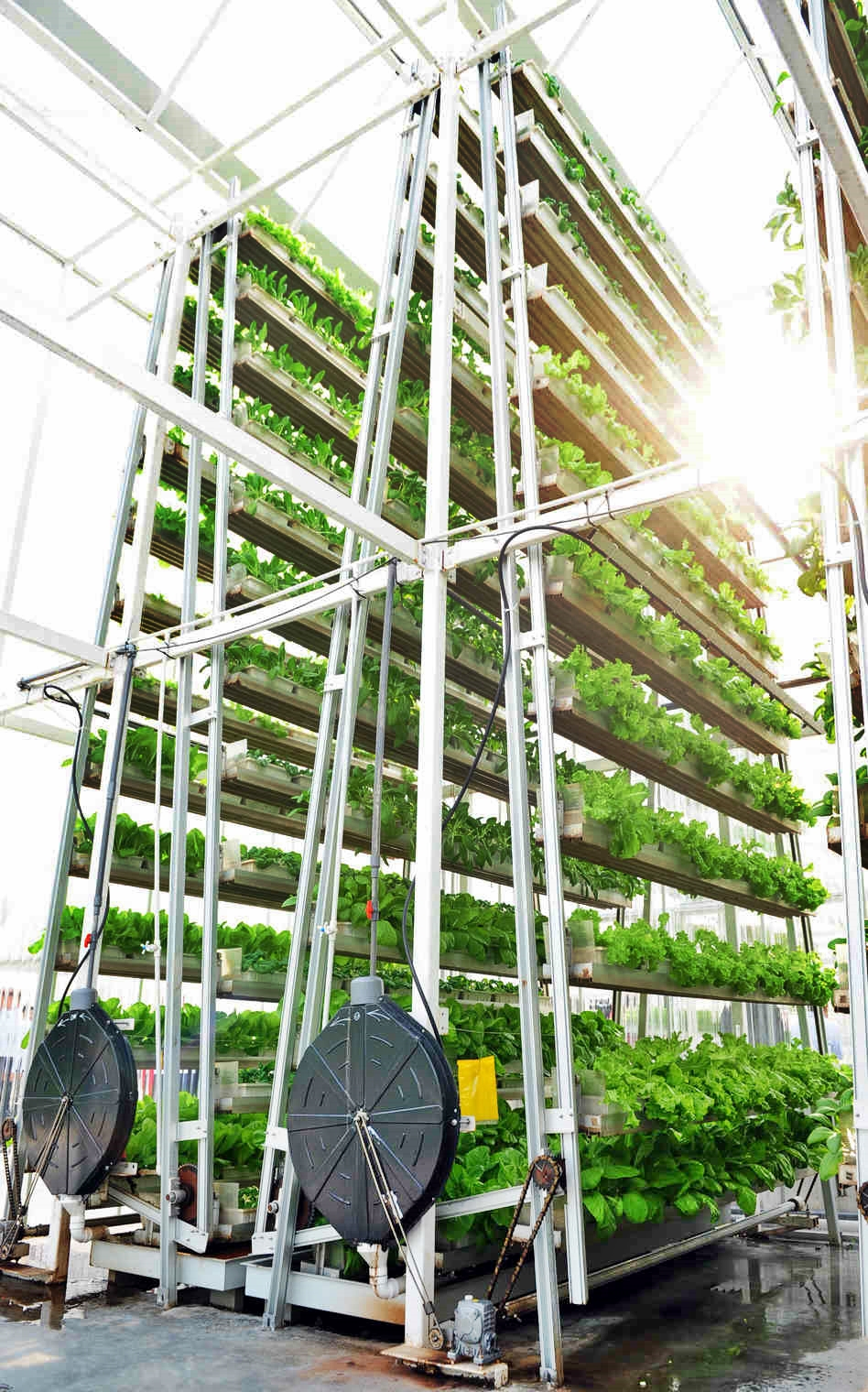 Urban Growth Singapore S First Commercial Vertical Farm