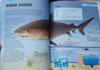 shark factivity sample page