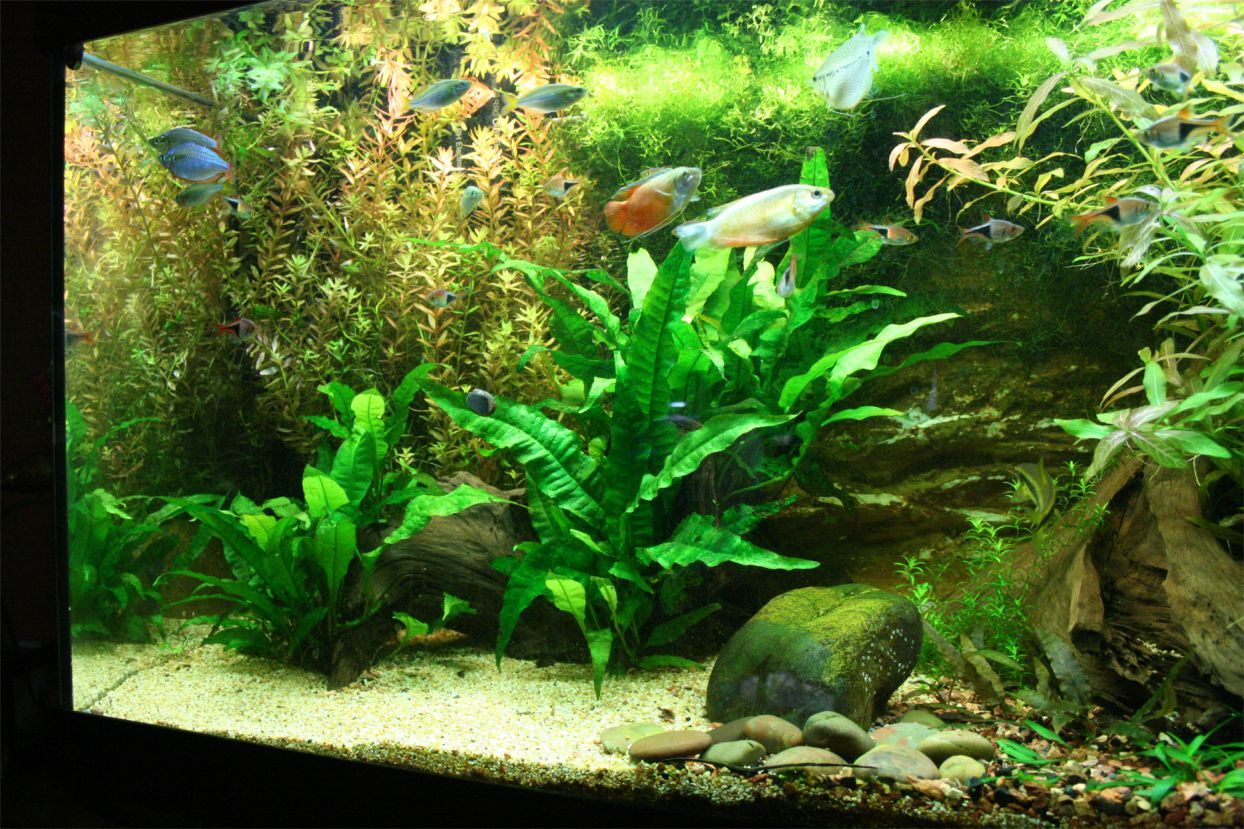 s c v  aquascaping ideas  south east asia biotope ii