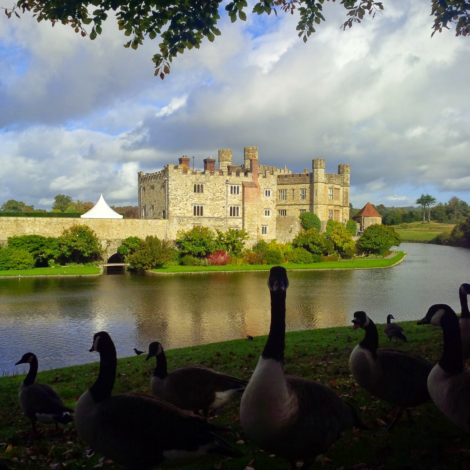 A flock of geese at Leeds Castle