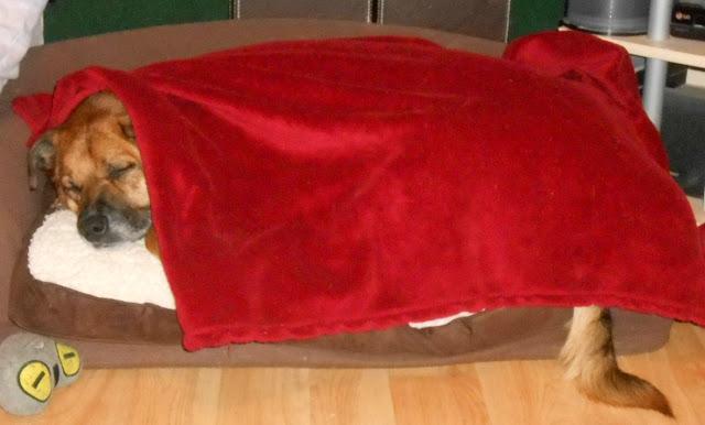 Jade on her own little mini sofa