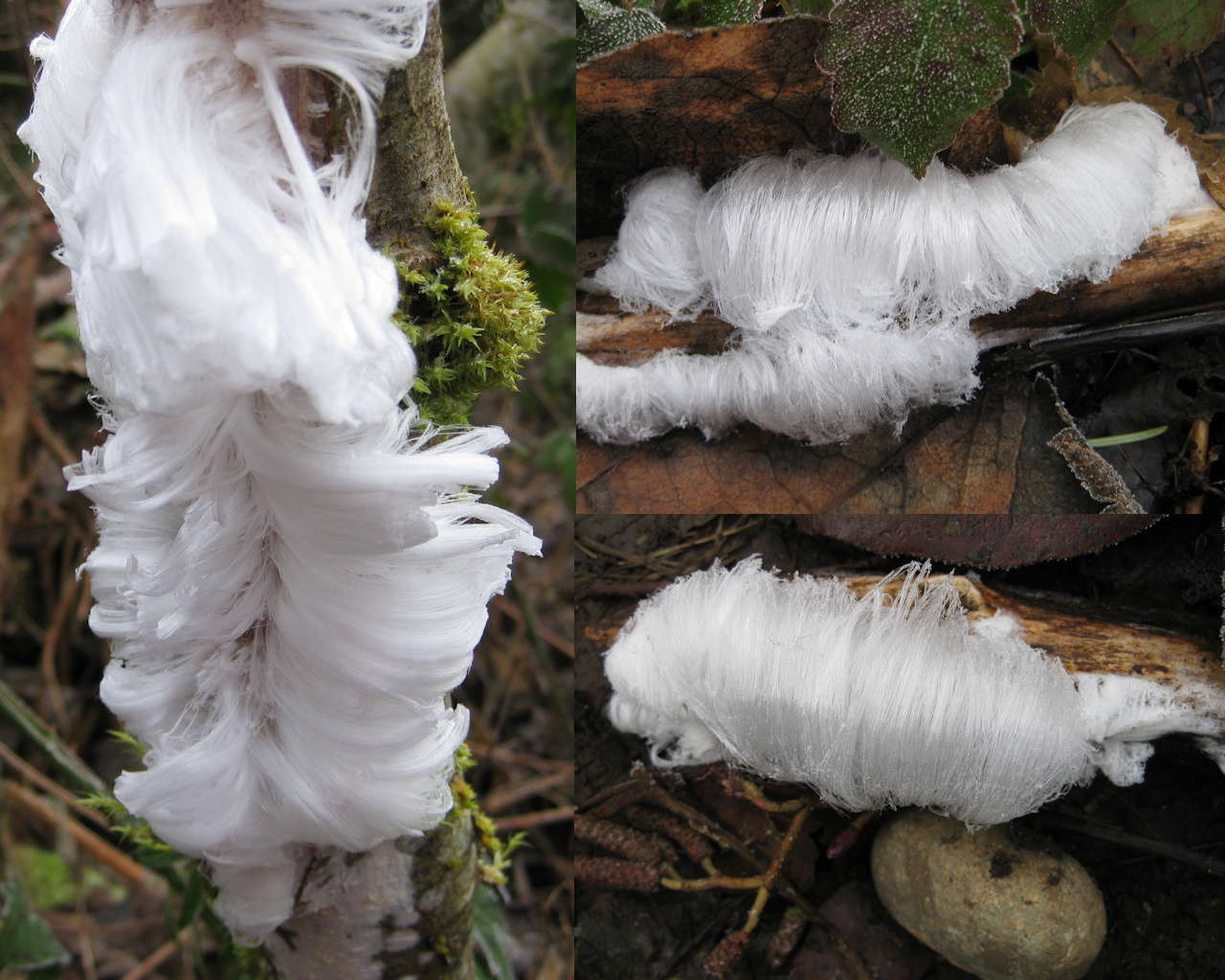 Frost Flowers by Nature