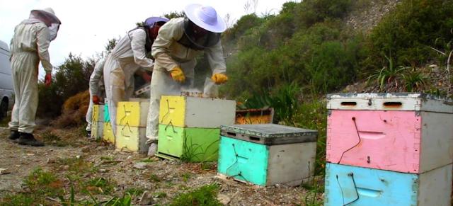 Η ανάπτυξη του μελισσιού όλο το χρόνο: Μερικά μυστικά!