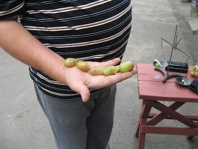 Каталог, прайс винограда на осінь 2017р.- весну 2018р.