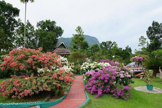 Pesona Wisata Taman Bukit Bougenville Singkawang Kalbar