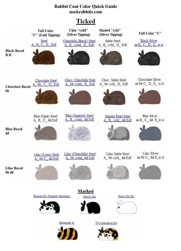 Mengenal tentang warna & gen warna Kelinci hias 4 lengkap