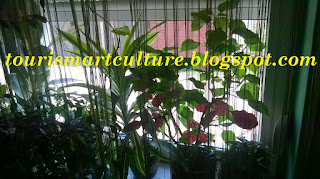 Indoor plants-NATURAL Clean Air