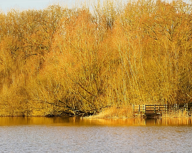 Wooden jetty backed by gold and orange willow trees