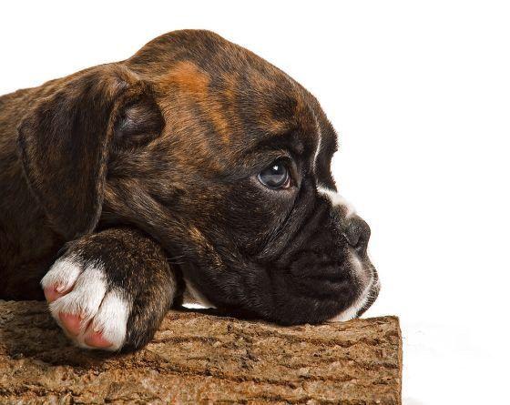 Fotos blancon  y negro de cachorros