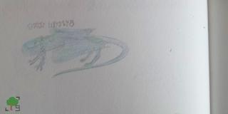 Szkocja, smoki, potwór z Loch Ness, zoologia, magizoologia