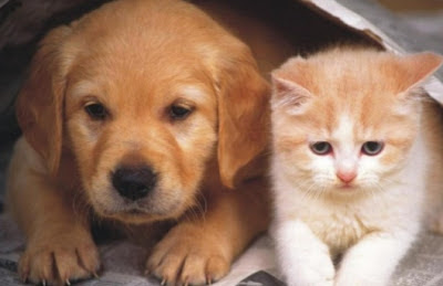 Cute Friendship