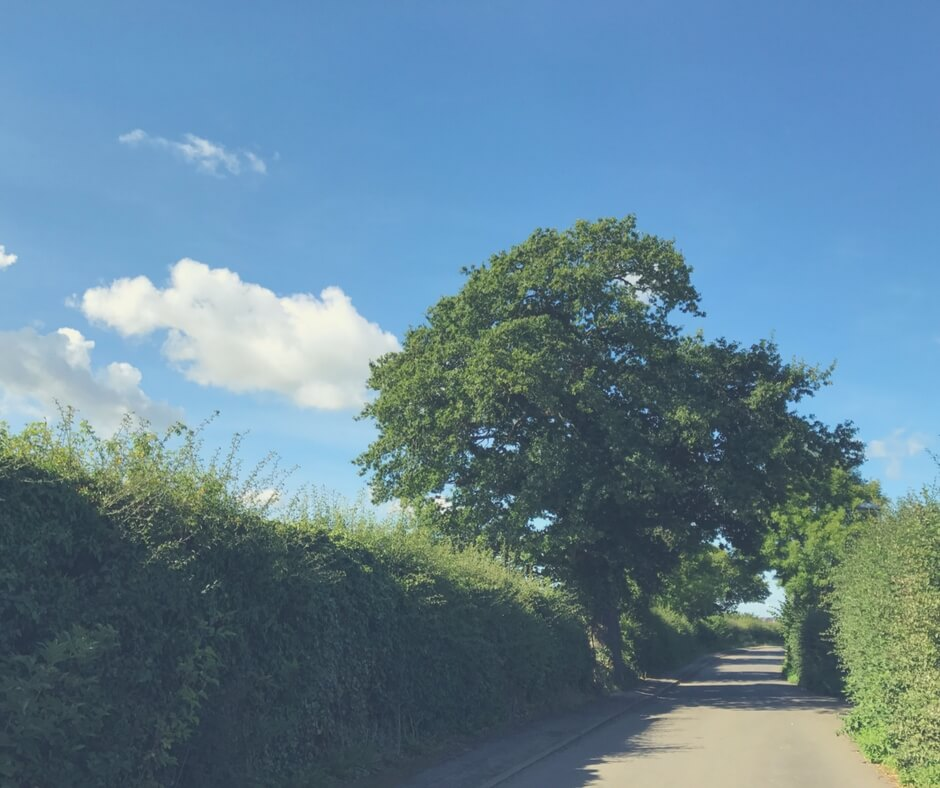blue skies with white fluffy clouds, green trees, overgrown hedges