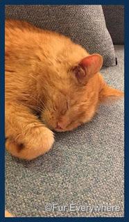Carmine sleeping on the couch. #ThankfulThursday