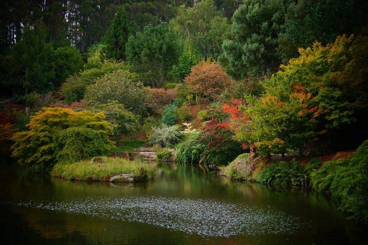 Rhododendron Garden (Emu Valley) Tasmania, Australia
