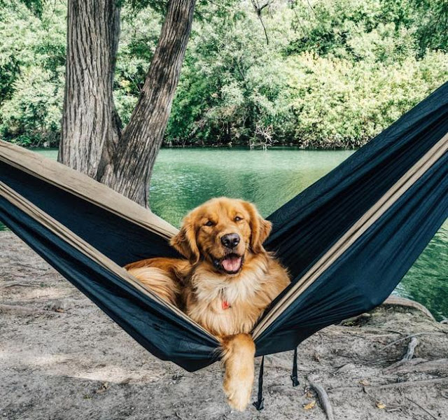 Chú chó sung sướng nhất quả đất vì được đi du lịch nhiều nơi trên thế giới