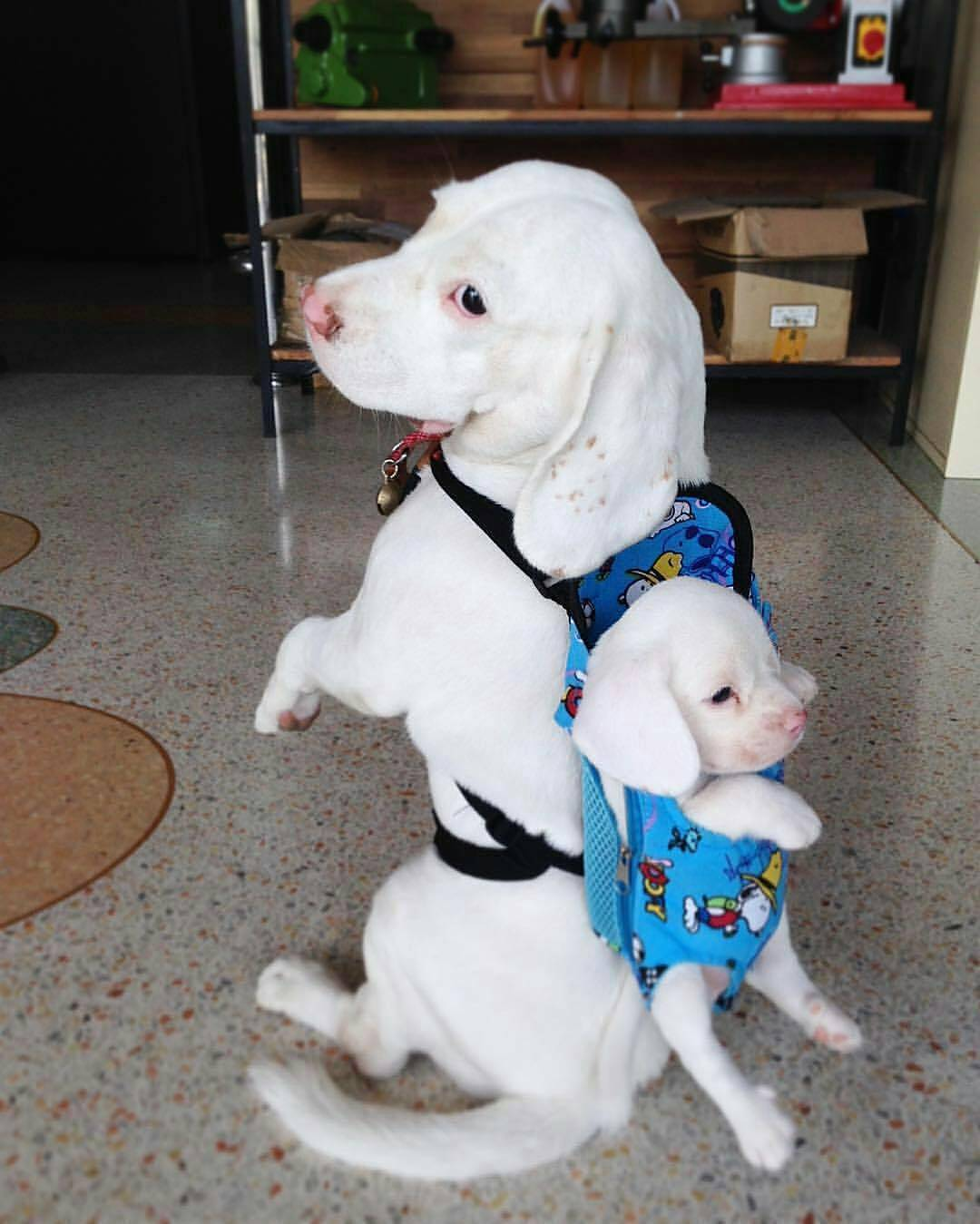 Cute dogs - part 148, cute dog photo, funny dog pictures