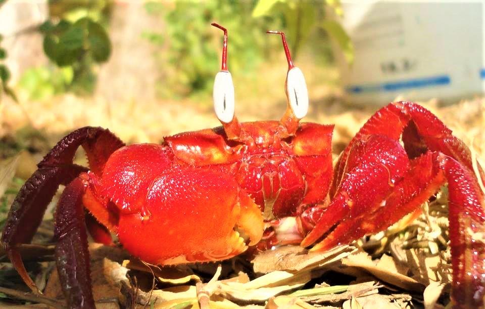 Kuakata Crab Island