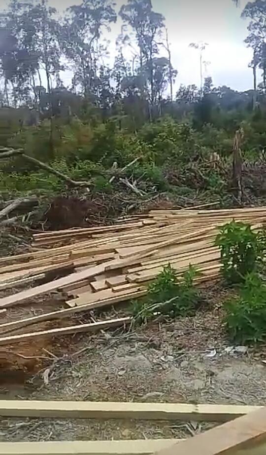 Hutan Dairi Rusak