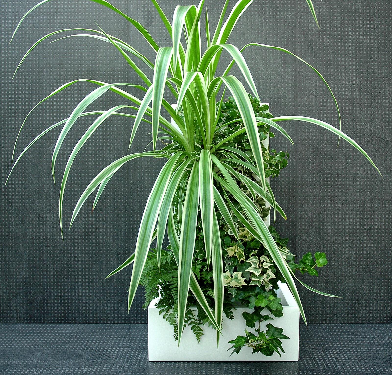 Plantes Pour Tableau Végétal Intérieur végéforme: tout sur canopus