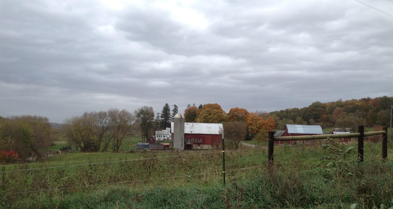 Amish Horses Amish Farm Tour