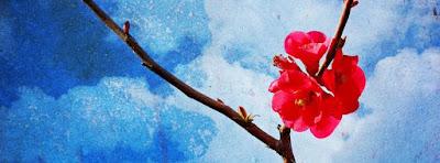 Couverture Facebook stylée fleur