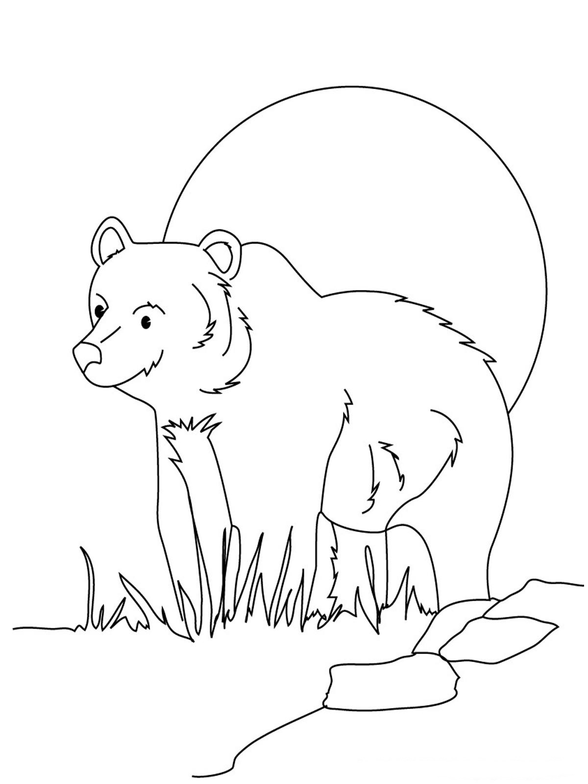 Bear Coloring Pages Realistic Realistic Coloring Pages