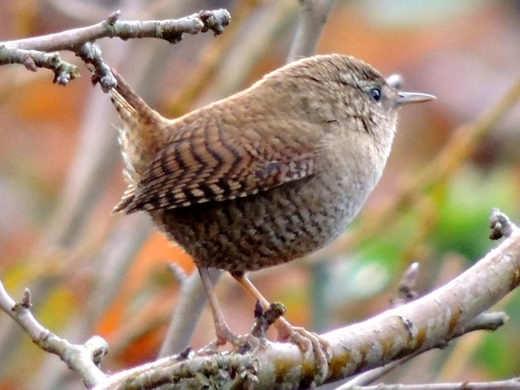 Il etait un petit jard 39 ain jardin et contemplation - Jardin des oiseaux petit quevilly ...