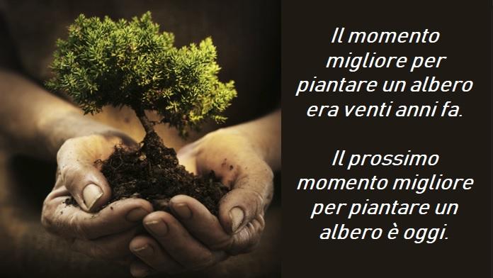 Il momento migliore per piantare un albero è oggi